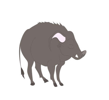 vector illustration of a boar that stands, drawing color, vector, white background
