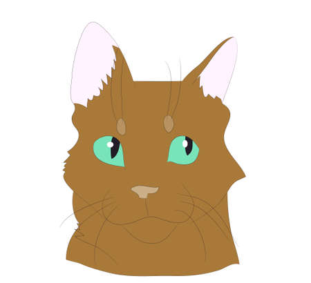 vector illustration cat portrait, vector, white background, color drawing