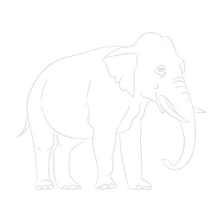 vector illustration elephant graphic line goes, vector, white background