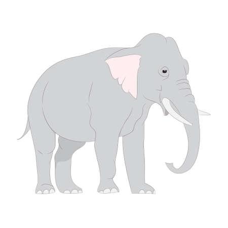 vector illustration gray elephant walks vector, white background, vector