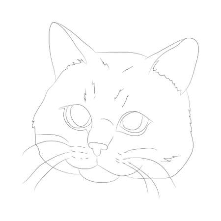 vector illustration cat portrait, lines, vector, white background, cat portrait