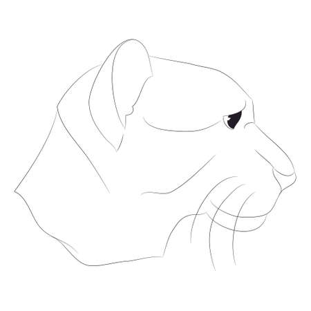 lioness portrait vector illustration, lines drawing, vector, white background