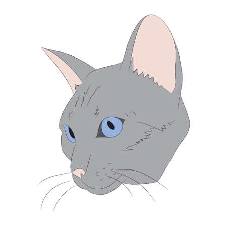 vector illustration cat portrait, vector, white background, color drawing