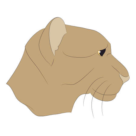 lioness portrait vector illustration, color drawing, vector, white background