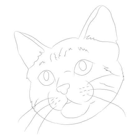 vector illustration cat portrait, lines, vector, white background, cat portrait