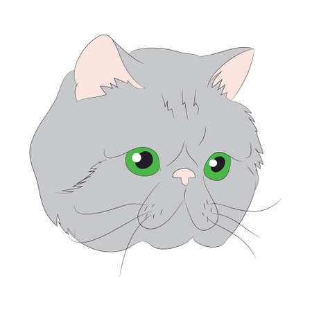vector illustration cat portrait, vector, white background, color drawing Reklamní fotografie - 131587134
