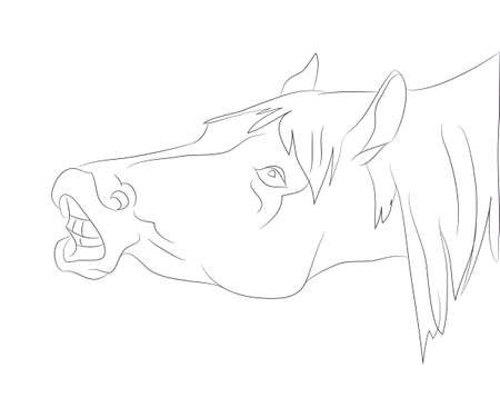 horse portrait vector illustration, line drawing, vector, white background Imagens - 132291146