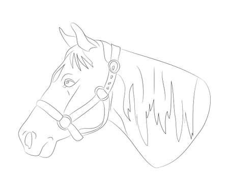 horse portrait vector illustration, line drawing, vector, white background Imagens - 132299953
