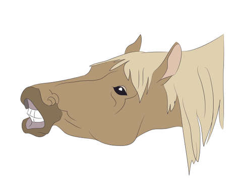 horse portrait vector illustration, color illustration, vector, white background