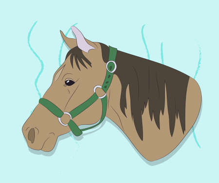 horse portrait vector illustration on a colored background, vector, colored background