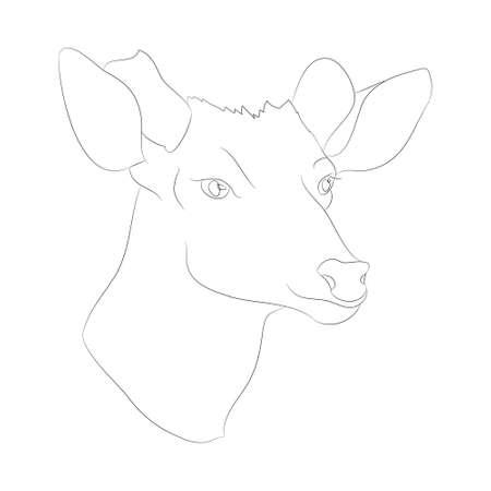 deer portrait vector illustration, line drawing, vector, white background