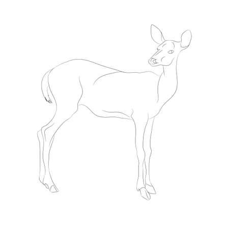 vector illustration deer stands drawing lines, vector, white background