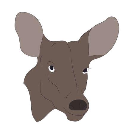 vector illustration deer portrait,color drawing, vector, white background