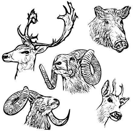 damhirsch: f�nf Waldtiere Vektor-Illustration Illustration