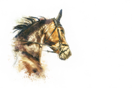 rebellion: horse head painting on white background