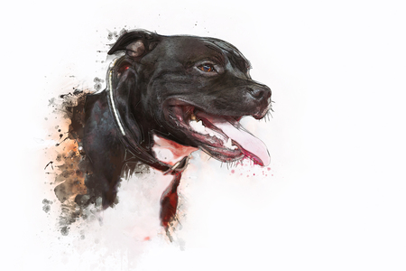 black and white pit bull: Painting of Dog Pit bull Terrier