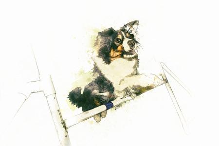 Border Collie illustration on white background