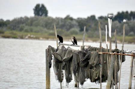 fishing net: a fishing net