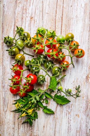 tomate cherry: tomate cherry en un diferente estado de madurez Foto de archivo