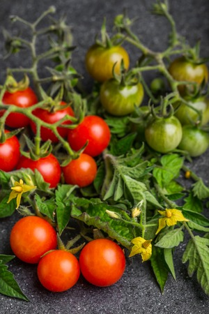 Cherry tomato in a different stage of maturity