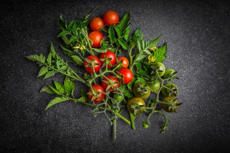 maturity: Cherry tomato in a different stage of maturity