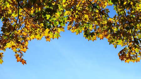 maple leaves, autumnal frame, golden autumn photo