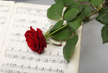 red rose and old note notes love music background