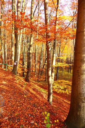 Fall in Park beautiful autumn yellow wood tree Stock Photo - 13126539