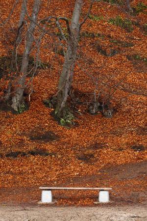 Autumn scene park bench background nature leafs photo