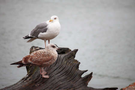 couple of seagulls sitting place outdoor nature photo