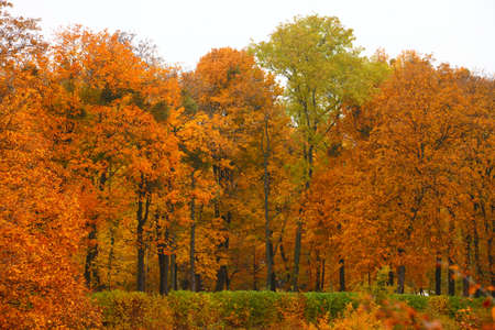 orange autumn maple leaf alley Nature background tree Park in fall time photo
