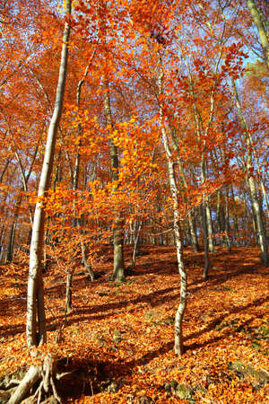 Fall in Park beautiful autumn yellow wood tree photo