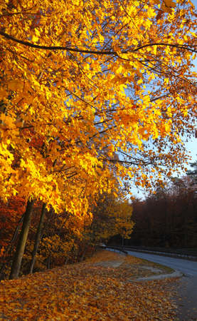 Fall in Park beautiful autumn yellow wood tree road in Poland photo