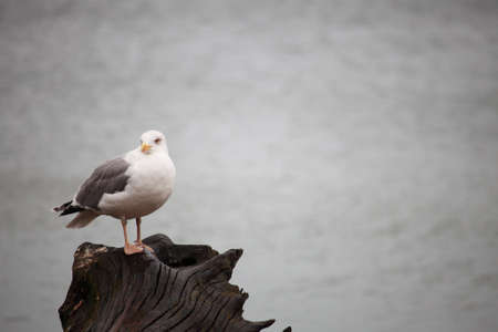seagull sitting place outdoor nature photo