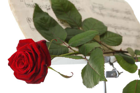 red rose and old note notes love music white background photo