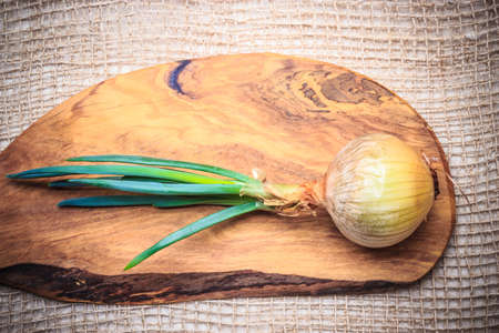 edible plant: Healthy edible plant. Onion bulb with chives fresh green sprout, vegetable food on wooden board