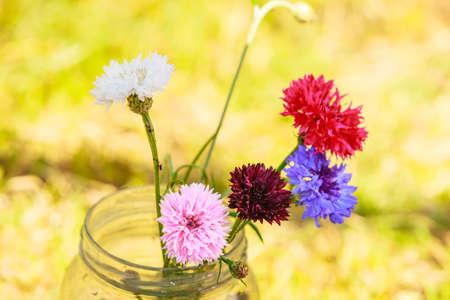 garden cornflowers: Colorful picked cornflowers in glass jar standing outdoor in the garden