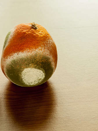 rotten fruit: Moldy grapefriut on plate at wooden table. Unhealthy and rotten fruit. Stock Photo
