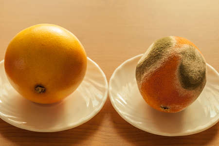 rotten fruit: Ripe and moldy grapefriut on plate at wooden table. Difference between healthy and rotten fruit. Organic food nutrition.
