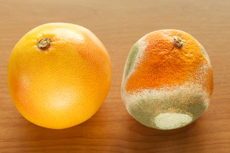 rotten fruit: Ripe and moldy grapefriut on wooden table. Difference between healthy and rotten fruit. Organic food nutrition. Stock Photo