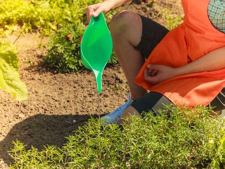regando plantas: Gardening. Closeup woman working in garden watering plants flowersbeds outdoor