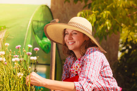 backyard woman: Mature woman wearing big straw hat gardening in her backyard