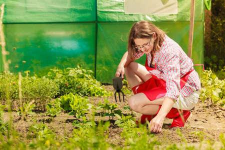 Reife Frau mit dem Gartenarbeitwerkzeug, das in ihrem Hinterhofgarten im Freien arbeitet