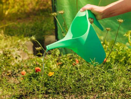 regando plantas: Jardinería. la mujer del primer trabajo en las plantas de riego de jardín al aire libre flowersbeds Foto de archivo