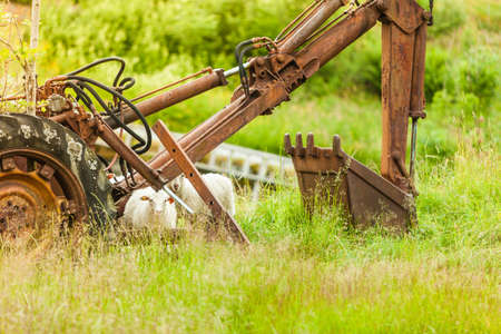 Abandoned old agricultural machinery covered with rust in high grass. Outdoor shot on sunny day.