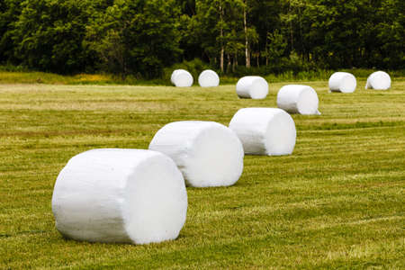 Agricultural landscape with straw packages on field. Cereal bale of hay wrapped in plastic white foil, summer in norwegian country Фото со стока