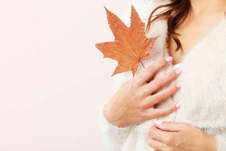 Female autumnal model. Closeup girl in white sweater holding dry brown maple leaf in hand