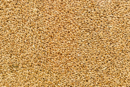 Close up background of sunflower seeds. Agricultural goods, rural food, nature texture pattern concept.