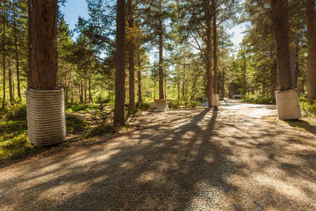 Liasanden rest stop area in pine forest, Leirdalen Lom municipality, Norway. National tourist route 55 Sognefjellet. Holidays relaxation on trip. Stock fotó