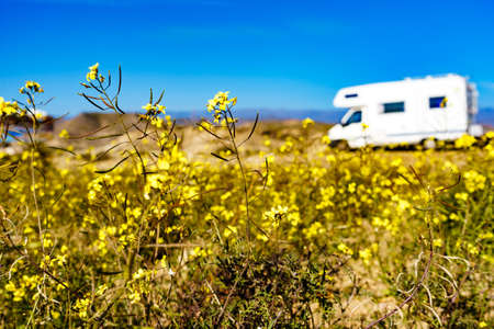 Yellow spring rape flowers and camper vehicle wild camping in the distance. Caravan vacation. Almeria province, Andalusia Spain.